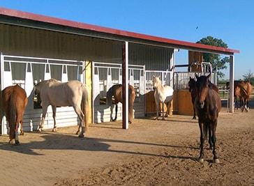 Aktivstall Nurnberg - naturlich Pferd